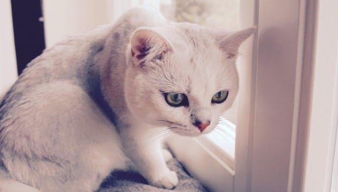 背筋のトレーニングで猫背を矯正する