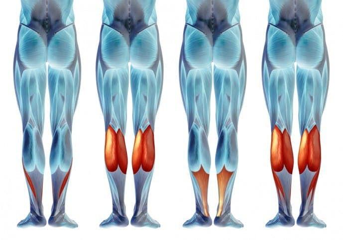 ふくらはぎの効果的な鍛え方|下腿三頭筋を鍛える筋トレ&ストレッチ ...