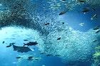 江ノ島でおすすめの観光スポット完全版。食べ歩きグルメまで徹底解説 | Smartlog