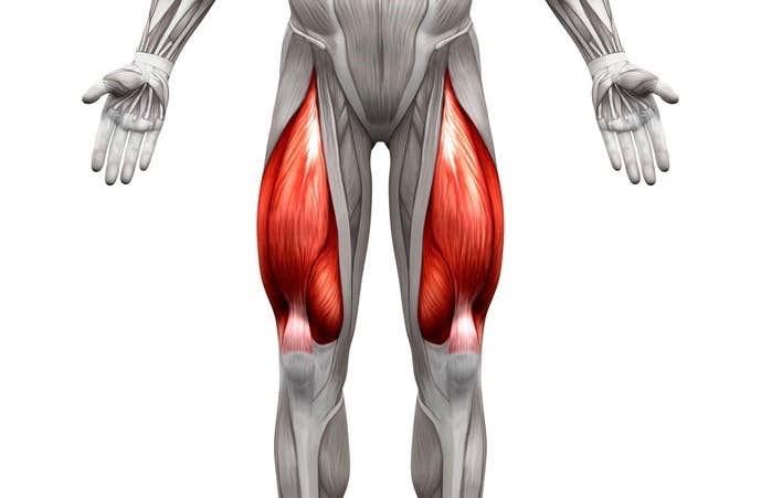 「大腿四頭筋」の画像検索結果