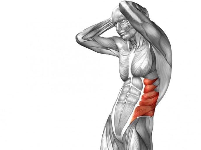 シックスパックの重要筋肉である腹斜筋