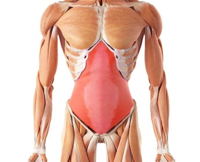 腹筋の中で重要な腹横筋