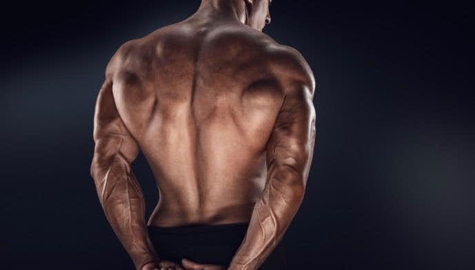 脊柱起立筋ってどんな筋肉なの?