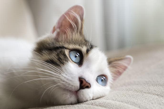 猫系女子に共通する性格や特徴