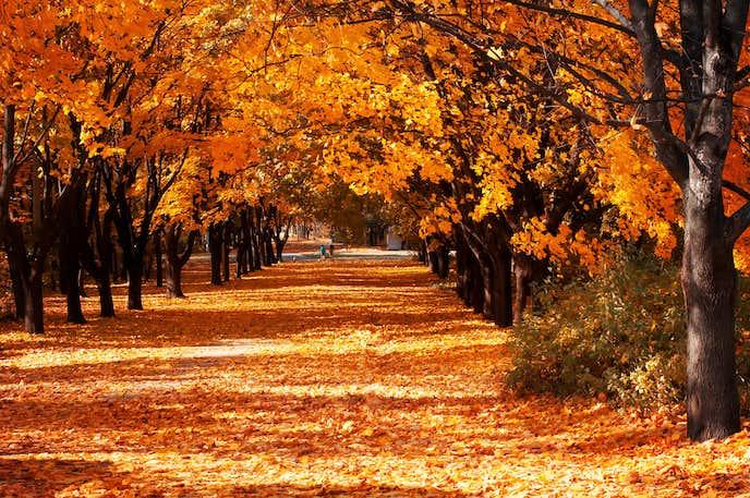 季節の挨拶 11月