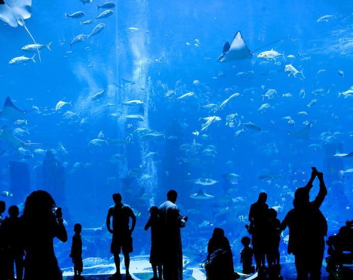 付き合う前のデートに最適な水族館
