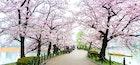 思い出に残る上野デートに。ぶらぶらだけで楽しい人気おすすめスポット特集 | Smartlog