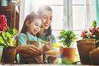 おしゃれな観葉植物のおすすめ15選。リビングなど室内を飾る人気商品とは | Smartlog