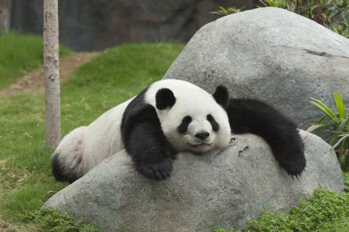 春デートにおすすめのスポット「上野動物園」