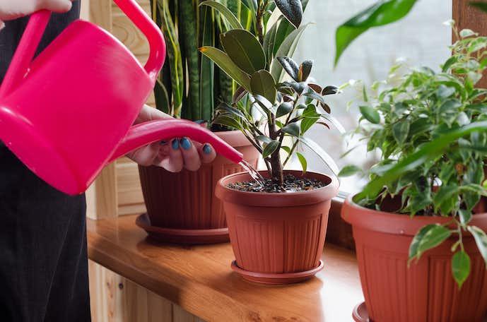 観葉植物のおすすめ