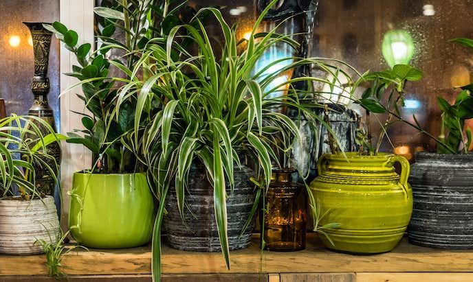 観葉植物のおすすめをご紹介