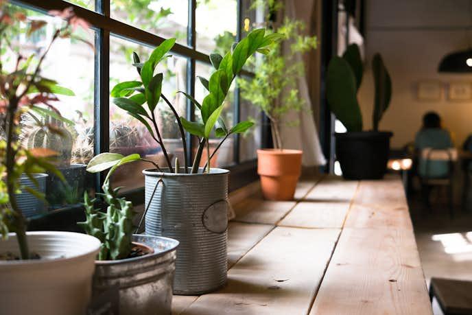 観葉植物を窓際に置いている風景