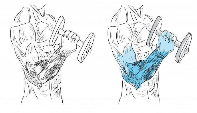前腕筋の位置