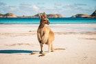 オーストラリアのおすすめ観光スポット25選。定番&穴場の人気スポットをジャンル別に解説 | Smartlog
