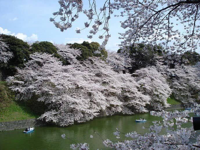春のおすすめデートスポット「千鳥ヶ淵緑道」