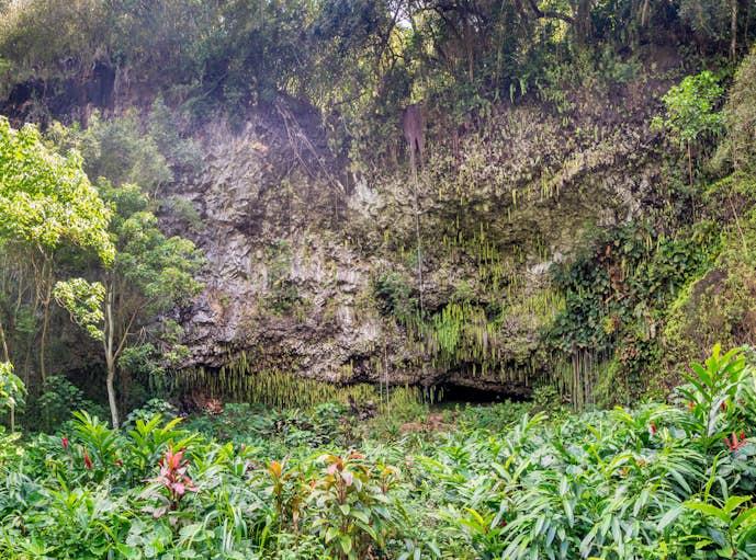 ハワイ・カウアイ島のおすすめ観光スポット「シダの洞窟」