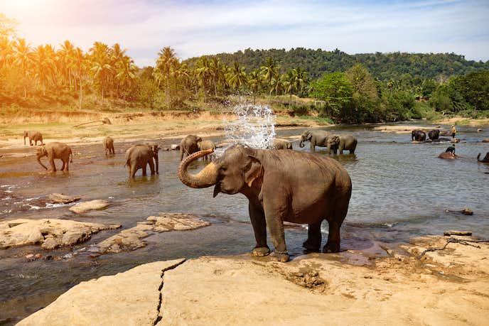スリランカでおすすめの観光スポット