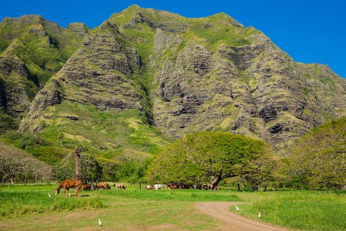 ハワイのおすすめ観光スポット「クアロア牧場」