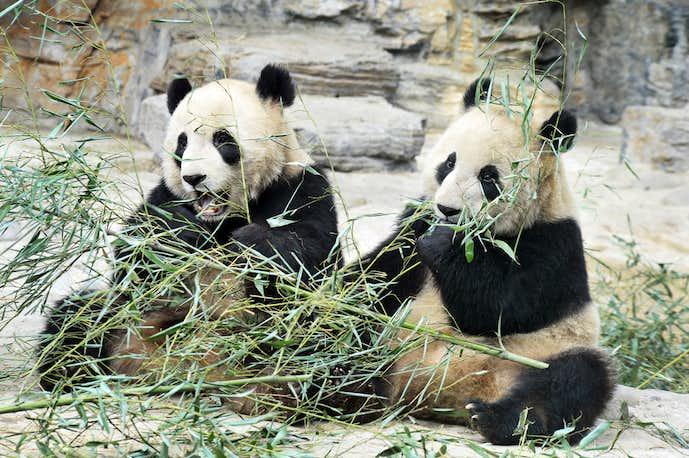 中国おすすめの観光スポット「北京動物園」