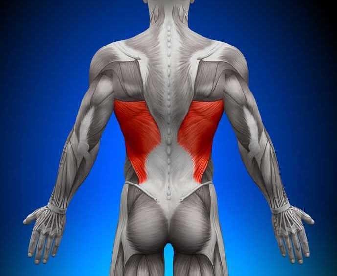 背中で一番体積の大きい筋肉、広背筋