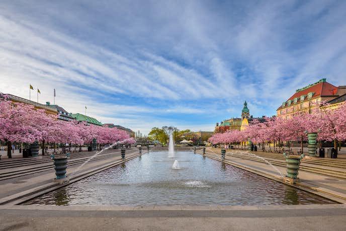 ストックホルムでおすすめの観光地は王立公園