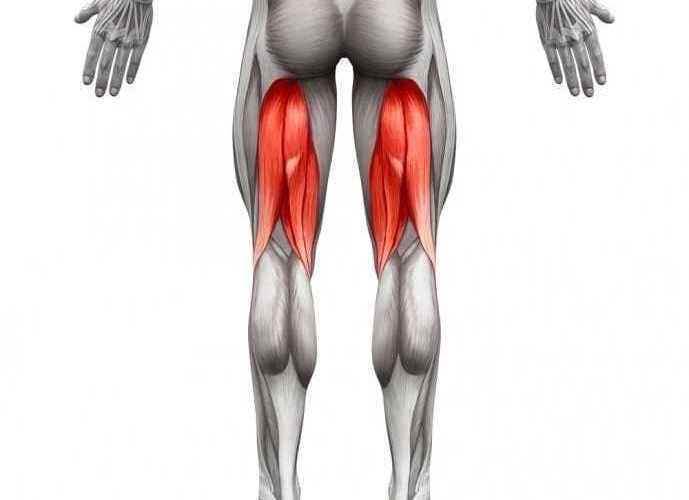 太もも後部にある筋肉、ハムストリングの画像