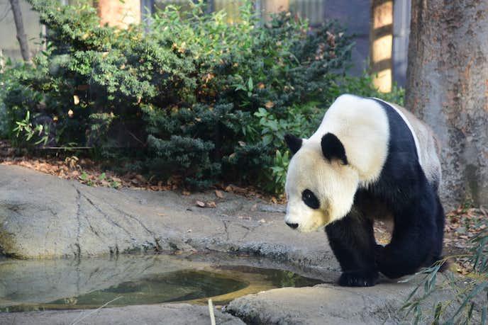 上野でおすすめの観光地は上野動物園