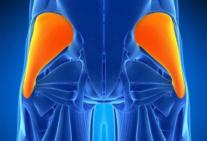 お尻の外旋運動に影響を与える筋肉、中臀筋