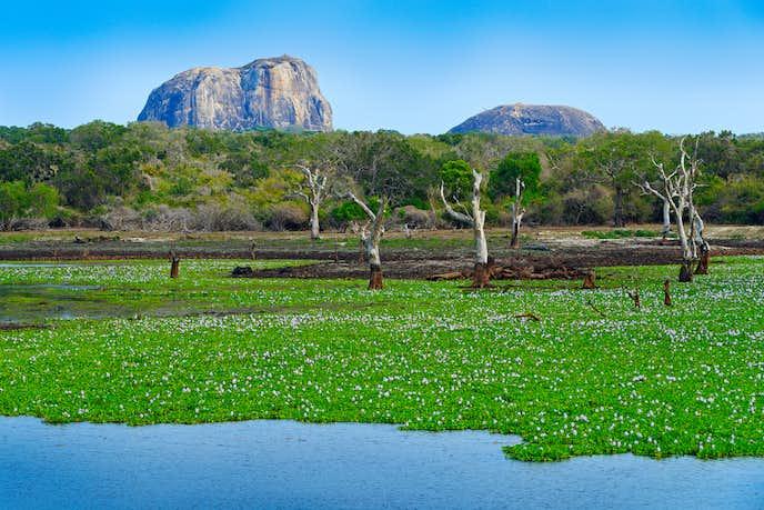 スリランカでおすすめの観光地はヤーラ国立公園