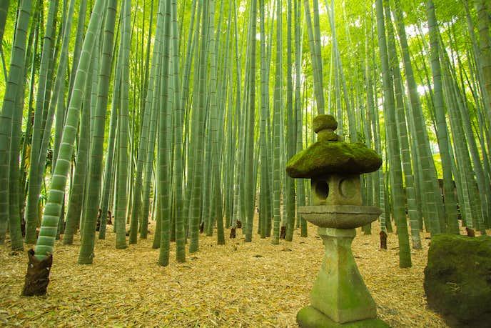 鎌倉でおすすめの観光地は報国寺