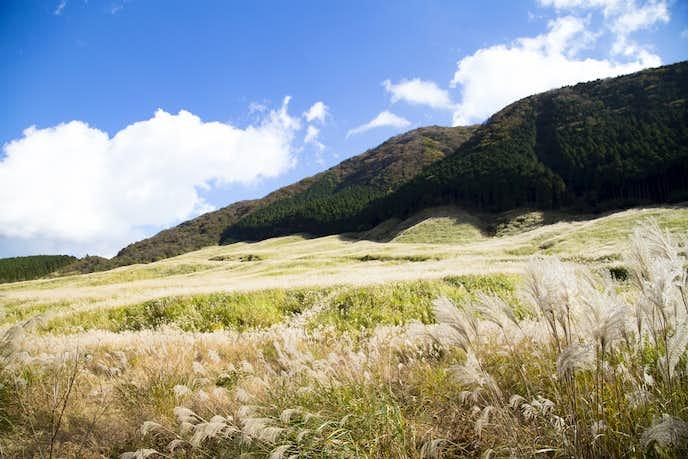 箱根でおすすめの観光地は仙石原高原