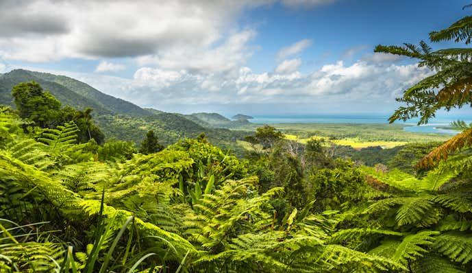ケアンズでおすすめの観光地はデインツリー熱帯雨林