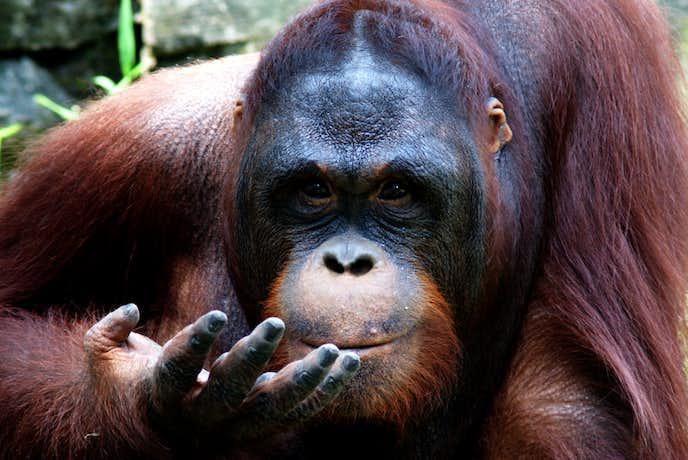 インドネシアでおすすめの観光地はスラバヤ動物園