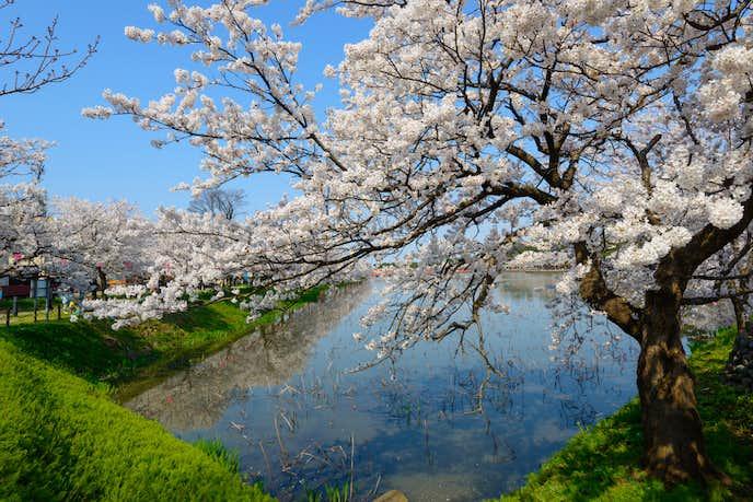 新潟の日本酒の特徴とは