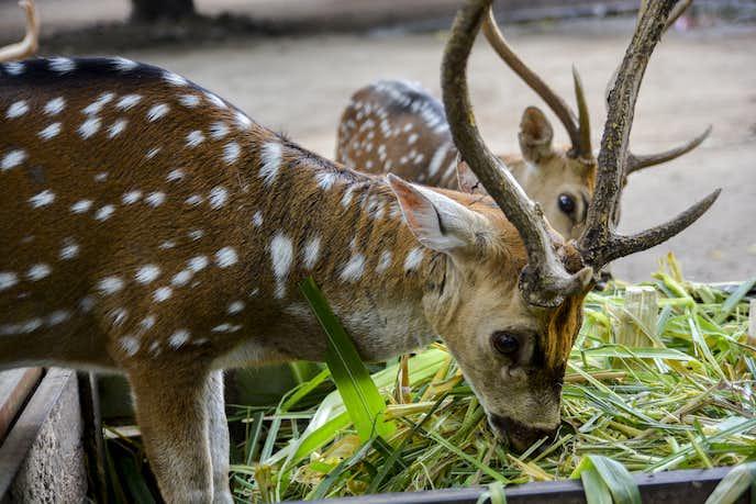 インドネシアでおすすめの観光地はゲムビラロカ動物園