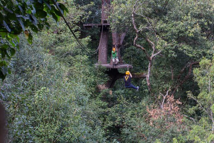 カンボジアでおすすめの観光地はフライト・オブ・ザ・ギボン