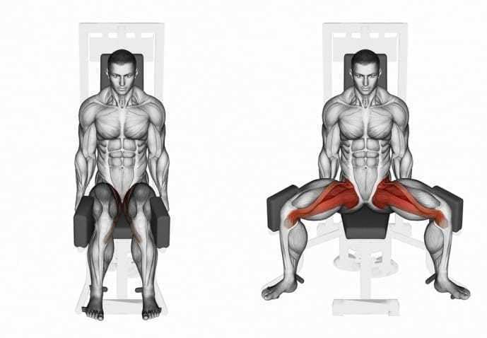 内太ももにある筋肉、内転筋群