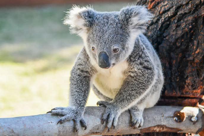 パースでおすすめの観光地はパース動物園