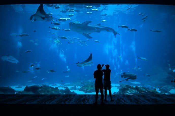 水族館デートは距離感が縮まる