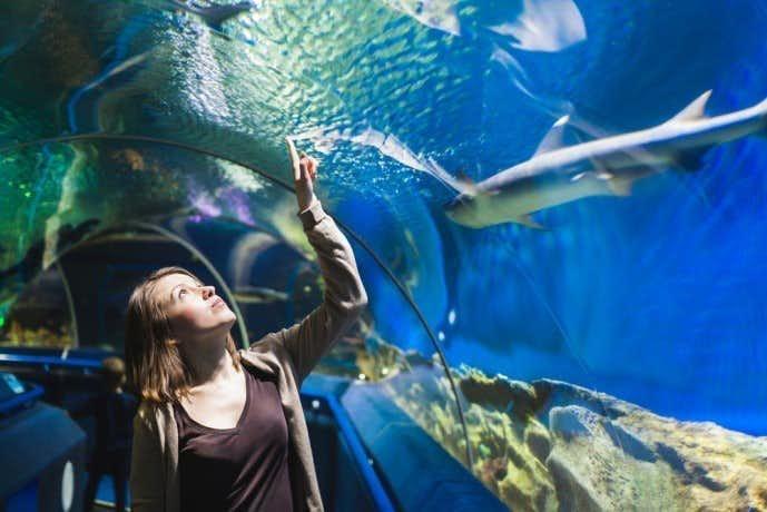 水族館デートは誘いやすい