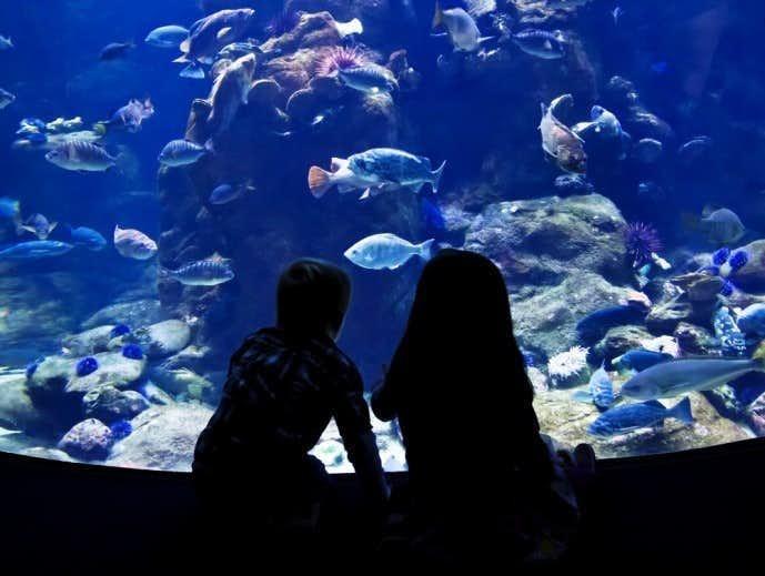 水族館デートは最強
