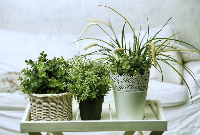 観葉植物のおすすめメーカーを紹介.jpg