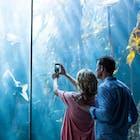 水族館デートへ付き合う前に行くと恋が加速する「7つの理由」   Smartlog