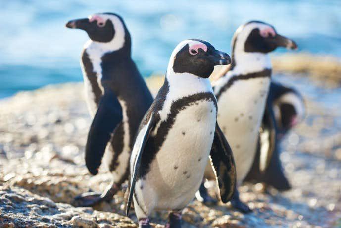 ペンギンを見に行く雨の日デート