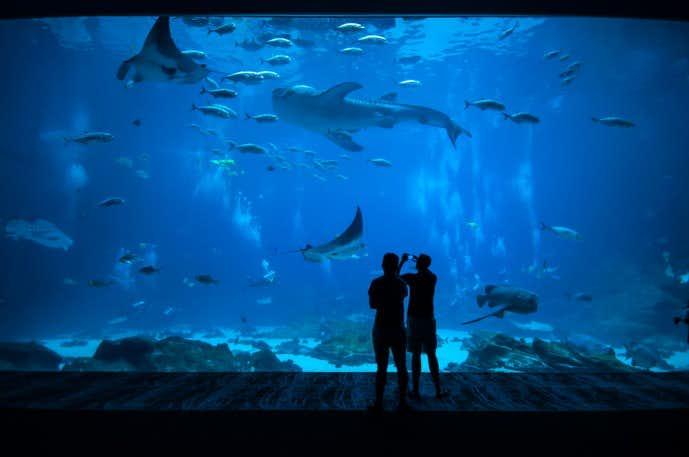 水族館デート 距離感