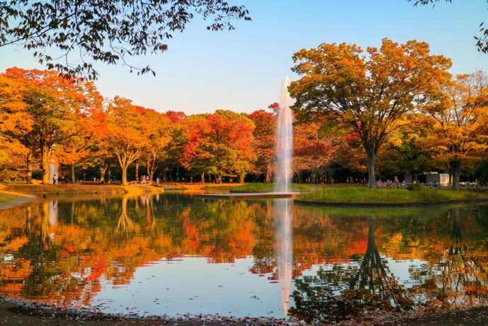 秋の代々木公園デート